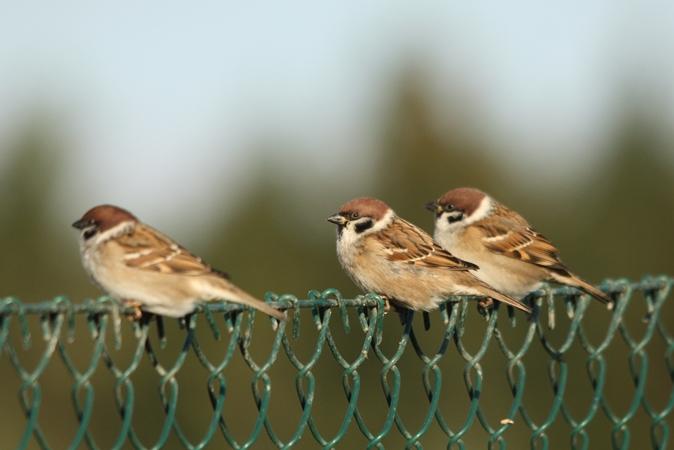 Wybrałeś obraz z artykułu: Ptasi masaż